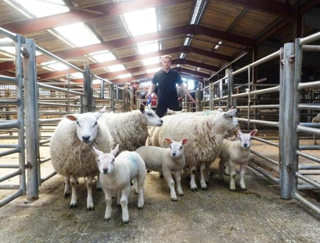 Texel cross hoggs with Beltex cross lambs from Harley Croft, Tropenhow, topped the trade at £165 per life