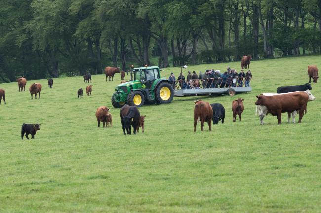 BEEF EVENT farm tour, to see some of North Bethelnie's Salers and Salers cross cows with calves at foot