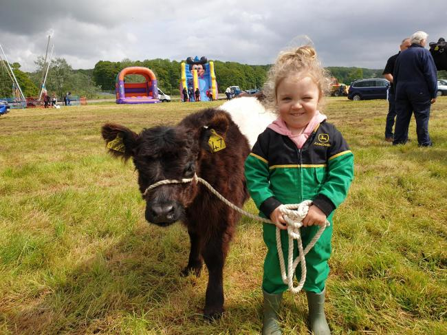 Two-year-old Daisy with her eight-week-old Belted Galloway heifer calf, Vera, at Newmilns show